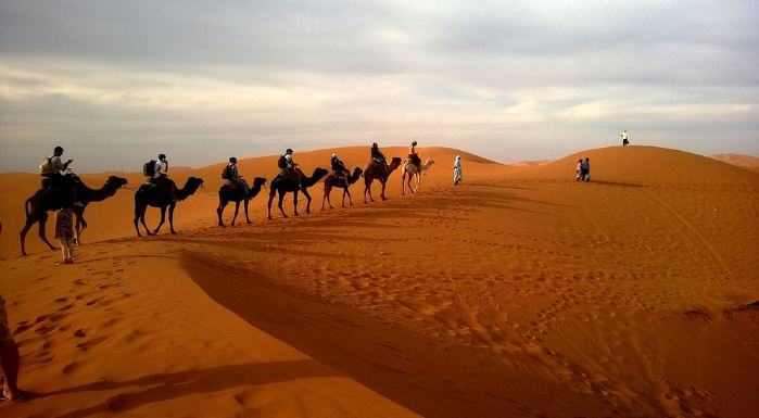 camel-safari-images